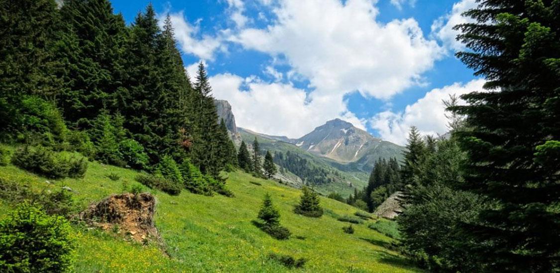 Nacionalniot-park-Sar-Planina-za-pocetok-so-sumi-vredni-nad-50-milioni-evra-i-osumdesetina-sumski-rabotnici-1